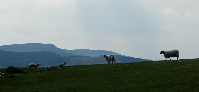 Near Rothbury, Northumberland.