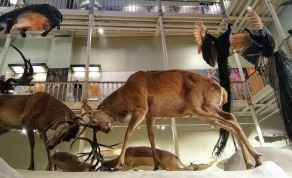 The Natural History Gallery.
