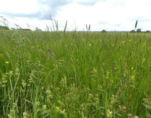 A meadow in Grewelthorpe, North Yorkshire.