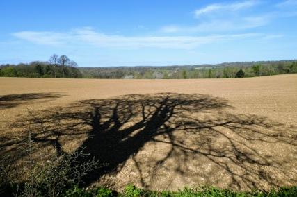 A pretty accurate portrait of an oak tree painted by the sun on a recently harrowed field last week.
