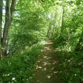 Without strong sun, there would be no dappled shade in the woods.