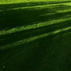 Evening i the garden.