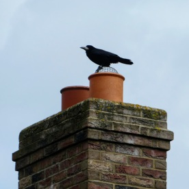 Crow on a roof.