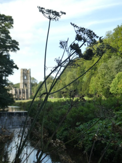 Walking along the River Skell towards Fountains Abbey