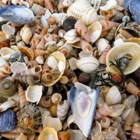 So many shells.