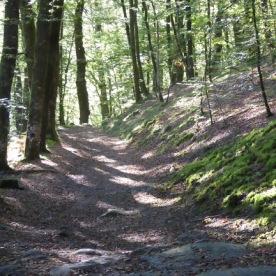 A woodland path on the Ripon Rowel walk.
